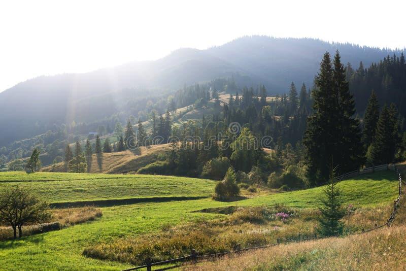 Download Crêtes De Montagne, Forêt Conifére Et Pré Vert Photo stock - Image du été, national: 77158302