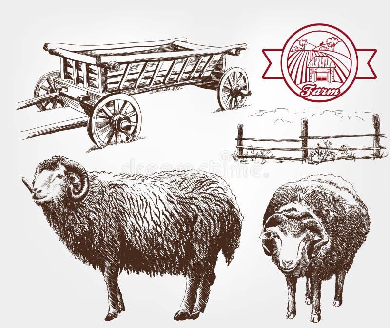 Cría de las ovejas libre illustration