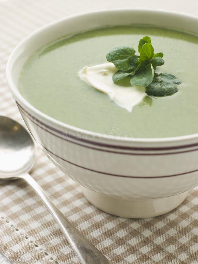 cr - fraiche miski zupy rukiew wodna zdjęcia royalty free