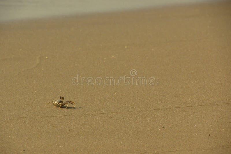 Crab на пляже острова Киева животиков Koh, Камбоджи стоковое фото rf