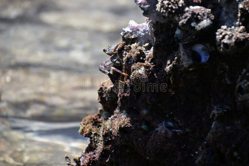 Crab на stone стоковое изображение