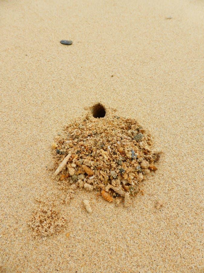 Crab отверстие на пляже, Onna, Окинава стоковое фото rf
