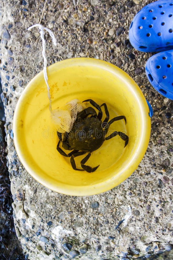 Crab я зацеплял линия crabbing в желтом ведре стоковые изображения
