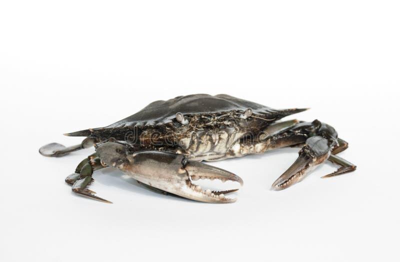 Download Crab stock photo. Image of posing, seafood, marine, posture - 20024566
