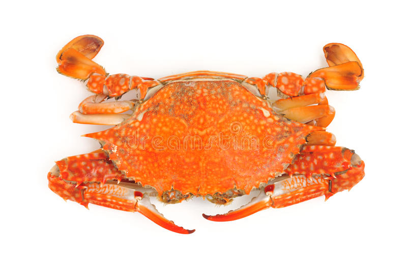 Download Crab stock photo. Image of isolated, freshness, background - 26428908