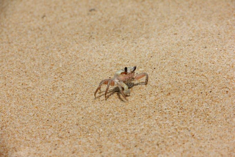 Crab2 fotografia stock libera da diritti