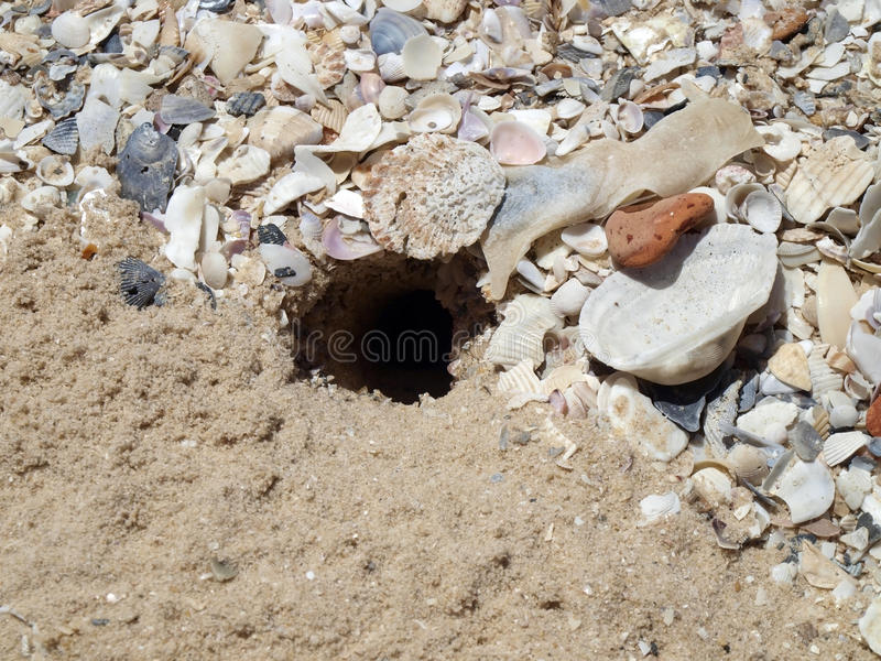 Crab burrow. On the sand royalty free stock photo
