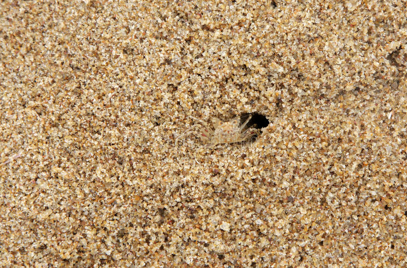 Download A Crab Camouflaged With The Same Color Of Sand Stock Photo - Image of nature, beauty: 21682282