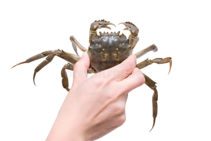 Crab (Clipping path) stock image
