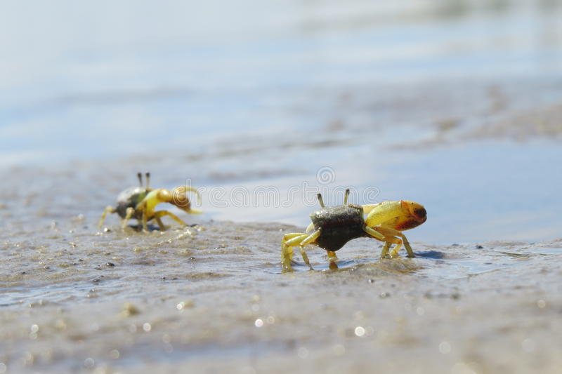 Crab conversation royalty free stock image