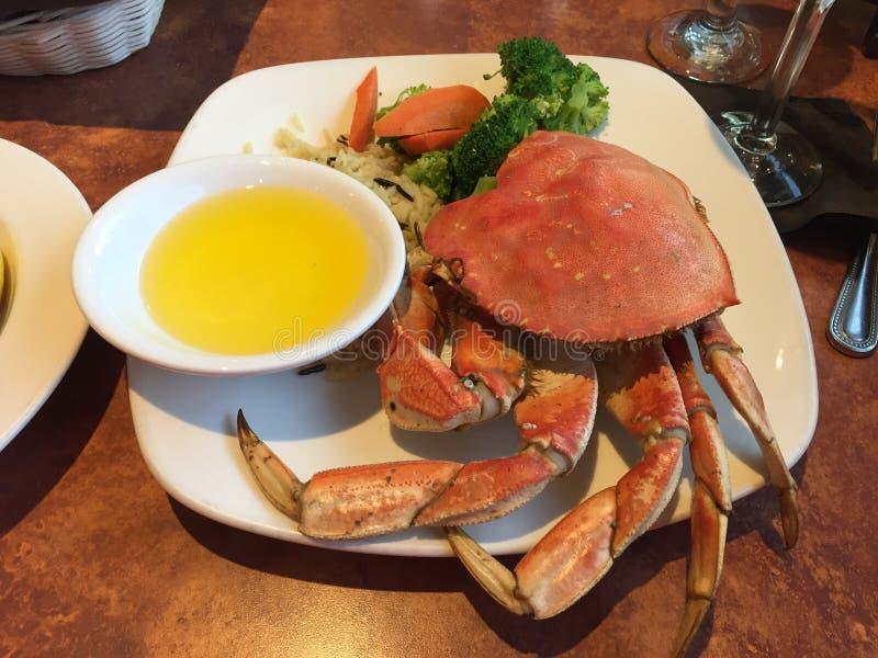 crab dungeness стоковая фотография rf