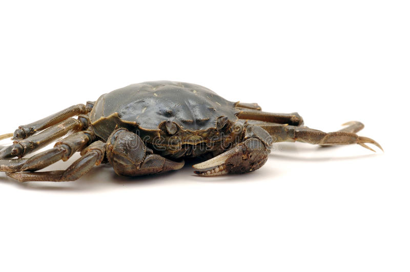 Download Crab stock photo. Image of crab, live, river, delicious - 34601644