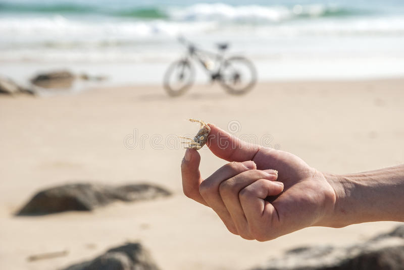 Crab in hand by the beach stock photos