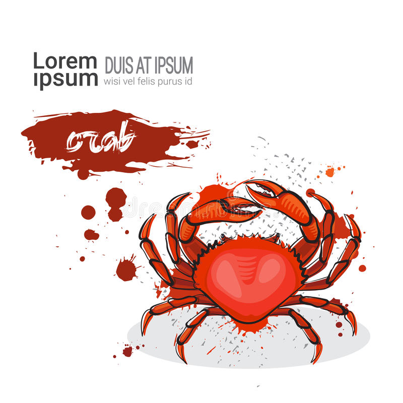 Crab Hand Drawn Watercolor Sea Food On White Background With Copy Space. Vector Illustration stock illustration