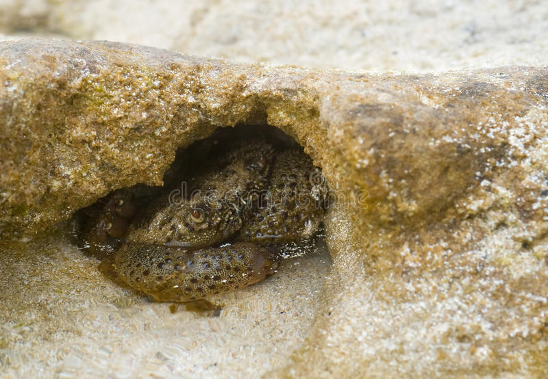 Crab Hiding In Rocks Stock Photography