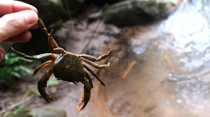 Crab holded by hand. In forest royalty free stock photos