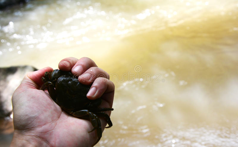 Crab holded by hand. In forest stock image