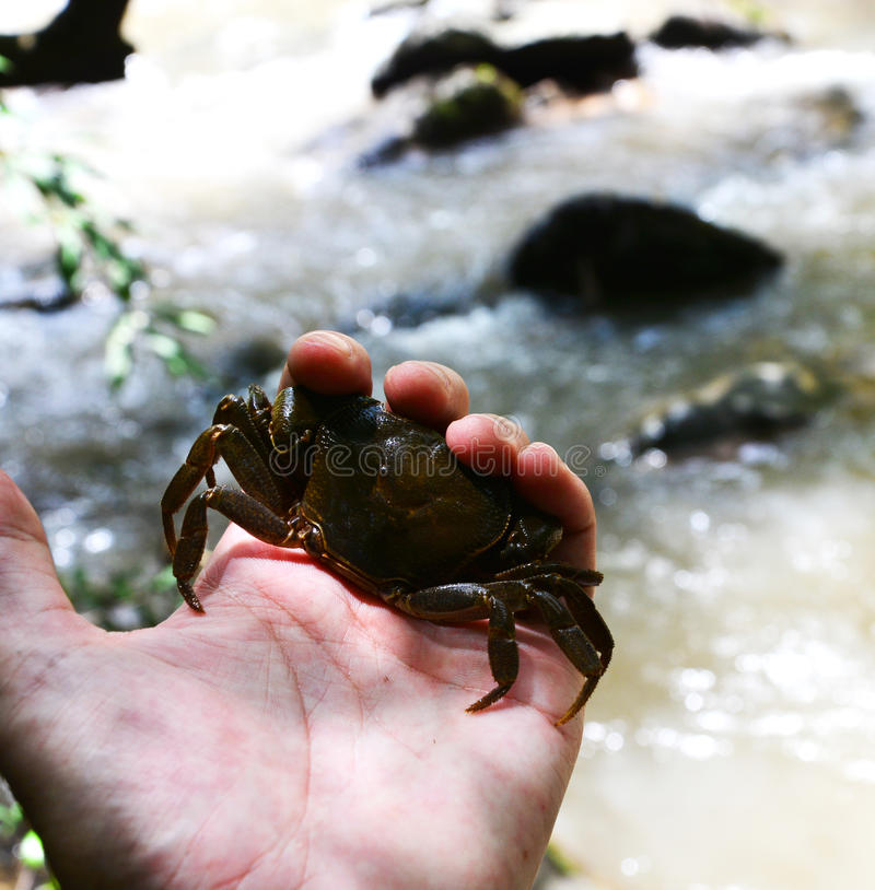 Crab holded by hand. In forest royalty free stock photo