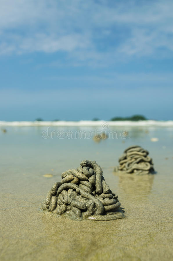 Download Crab hole stock photo. Image of animal, shell, ocean - 25216790