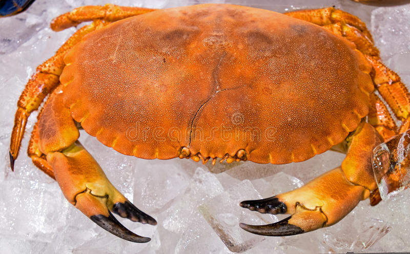 Crab on ice royalty free stock image