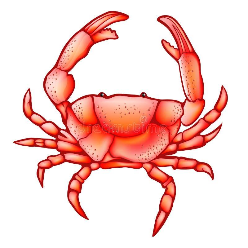 Crab icon sea ocean animal vector illustration