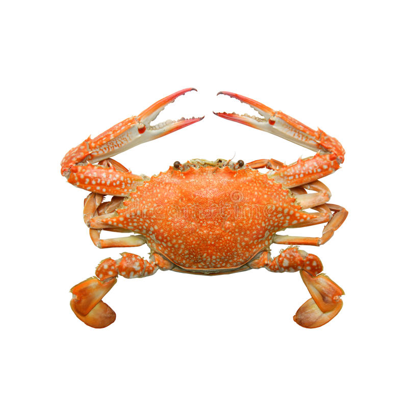Download Crab stock photo. Image of dinner, color, shellfish, restaurant - 34474718