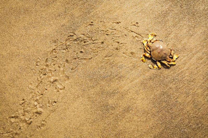 Crab moving on the wet sand stock photography