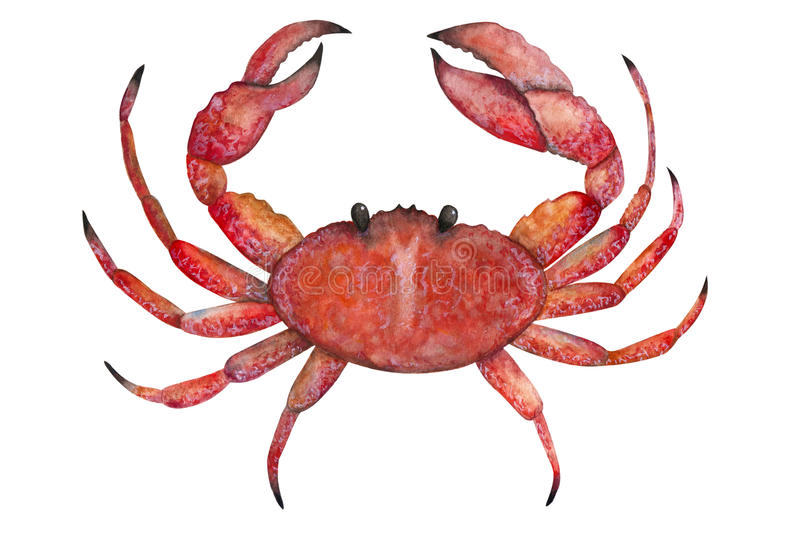 Crab painted with watercolors stock illustration