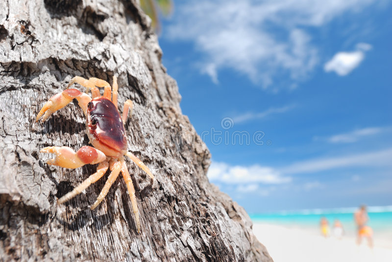 Download Crab on palm stock image. Image of wildlife, summer, animals - 7731715