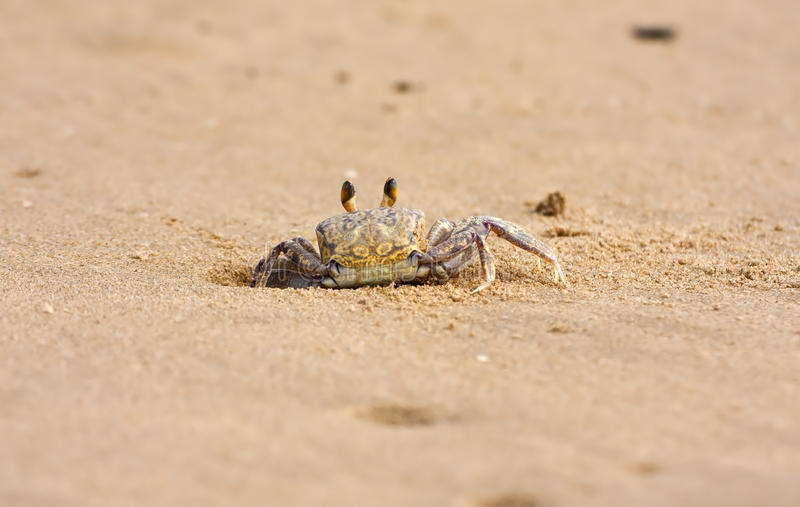 Download Crab Peeping Out Of Hole In Sand On Beach Stock Image - Image: 20075479