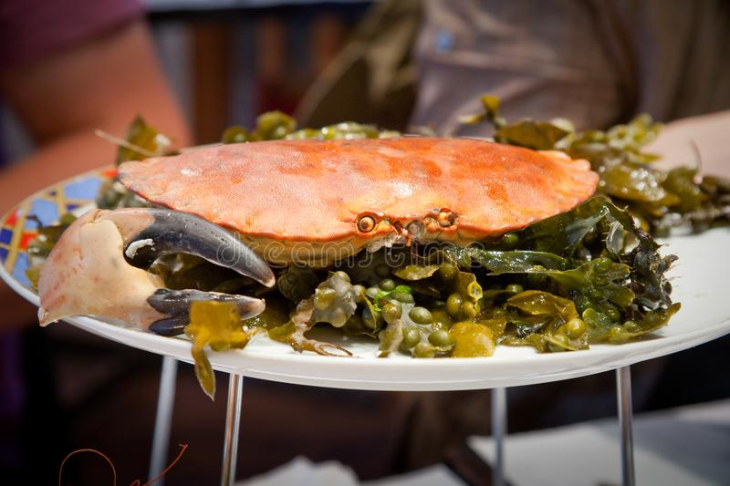 Download Crab on plate stock photo. Image of seafood, plate, dinner - 17766454