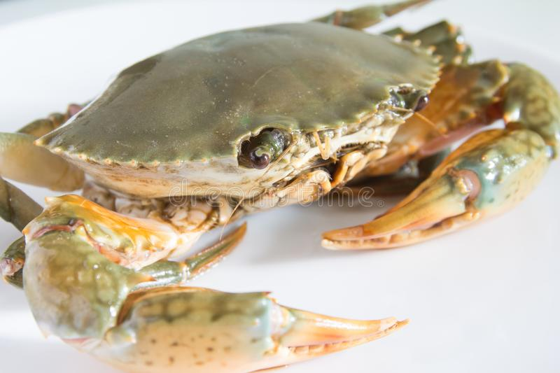 Crab on plate royalty free stock photography