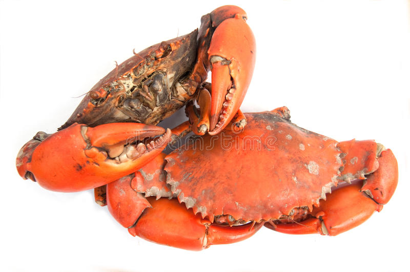 Crab ready to eat royalty free stock image
