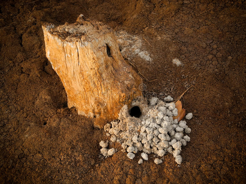 Download Crab's Home stock image. Image of hole, brown, africa - 25612001