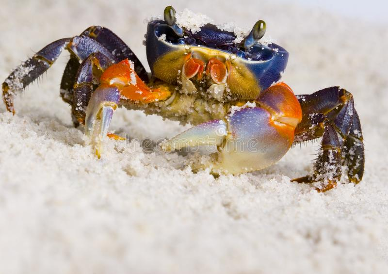 The crab on the sand stock photo