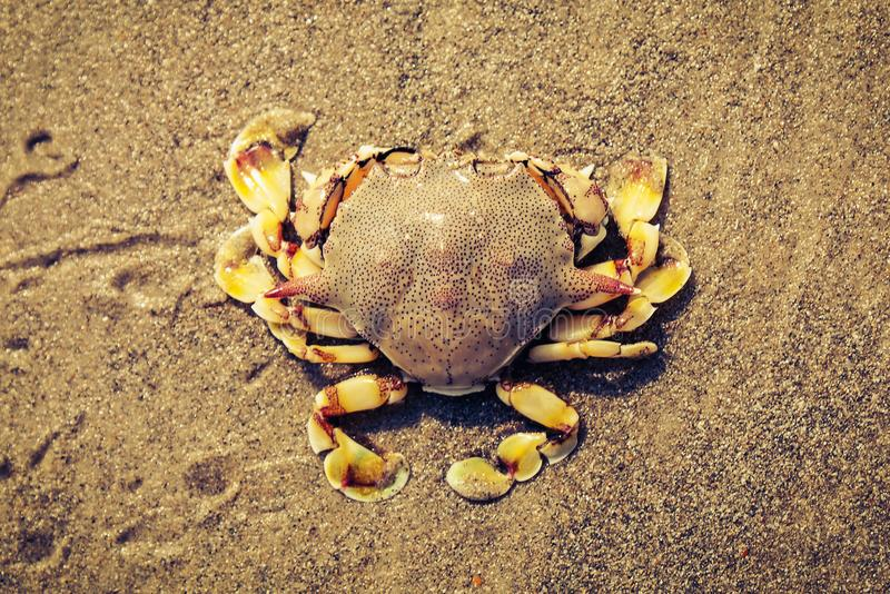 Crab on the sand split tone stock image