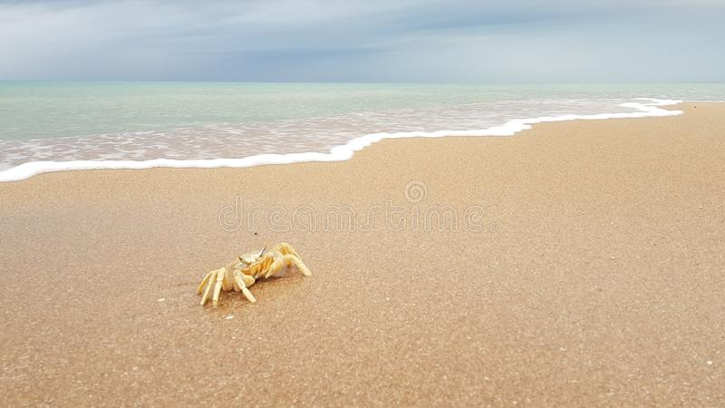 Crab on a sandy beach royalty free stock photography