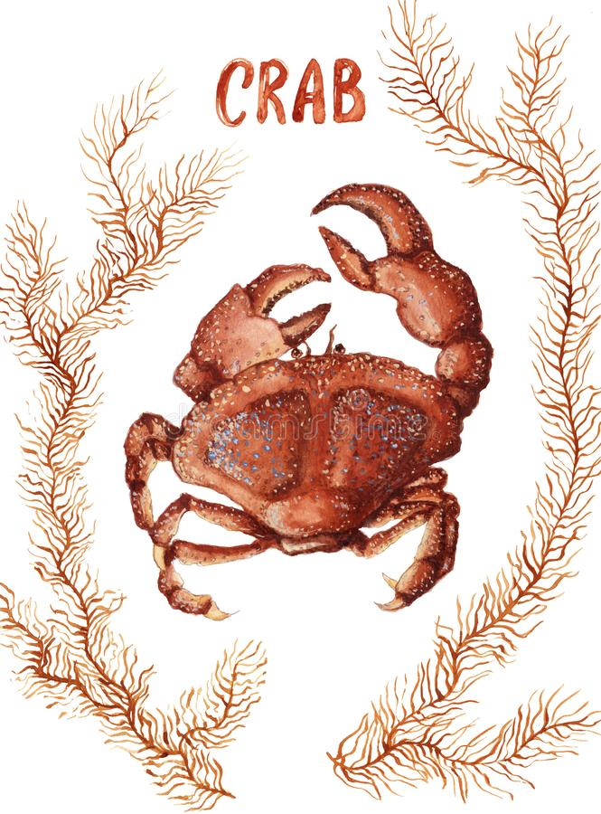 Crab and seaweed. Watercolor painted crab and seaweed isolated on white background vector illustration
