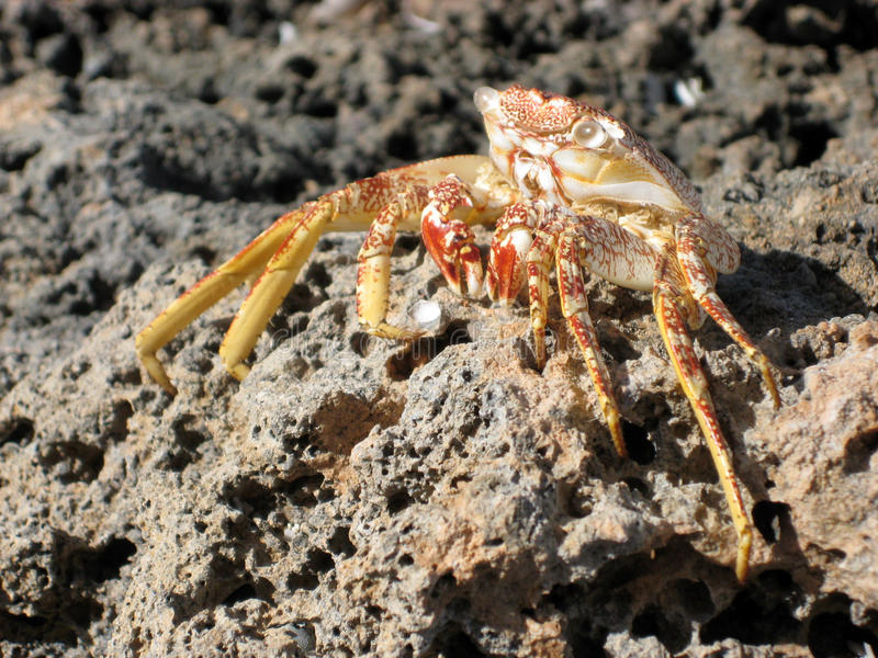 Download Crab shell stock photo. Image of dead, nature, beach - 12769354