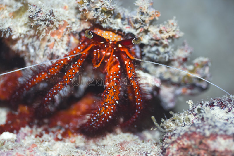 Download Crab in shell stock photo. Image of crab, outdoors, marine - 5344420