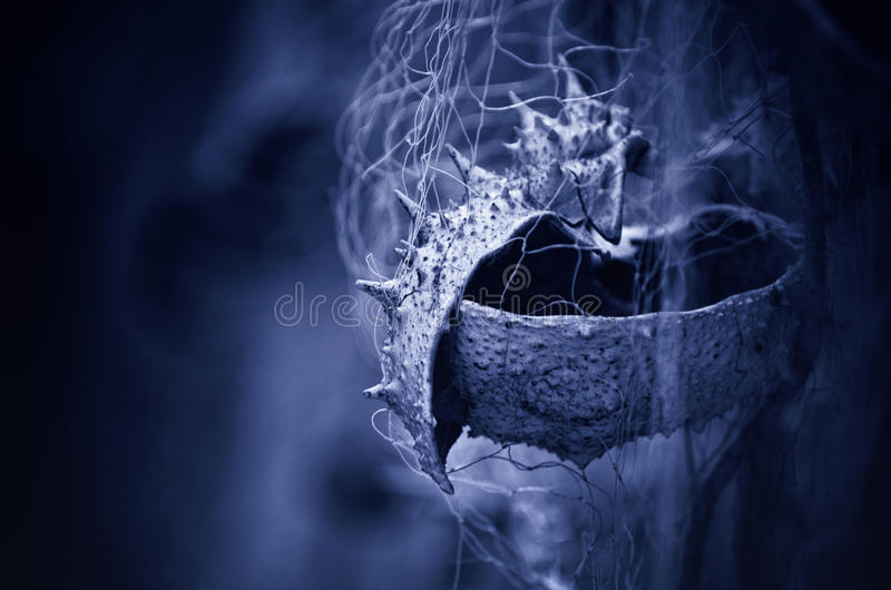 Crab shell caught in a fishing net, blue background royalty free stock photos