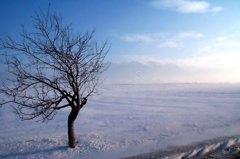 Crab tree on a winter storm stock image