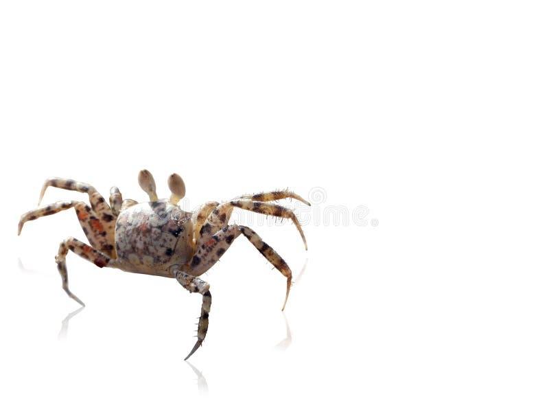 Crab2_9Ps images libres de droits