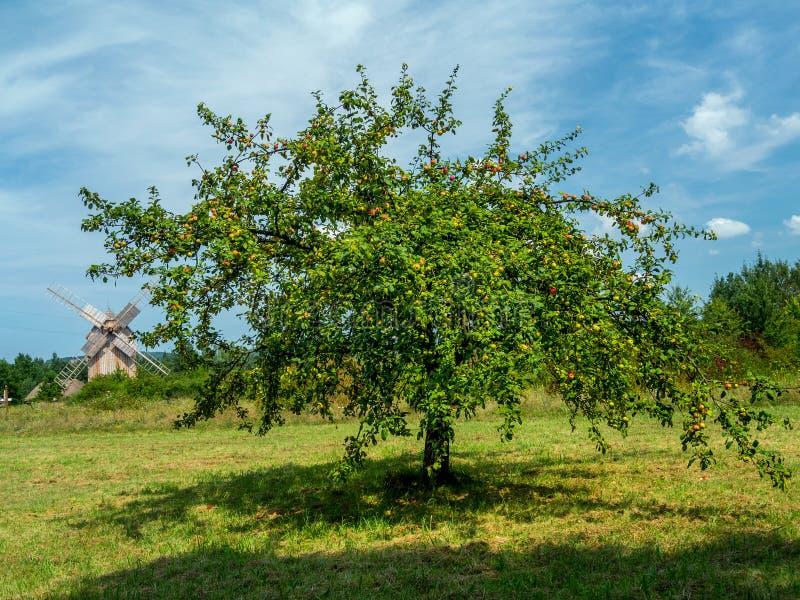 Crabapple drzewo fotografia stock