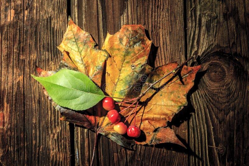 Crabapples на кленовом листе стоковые изображения