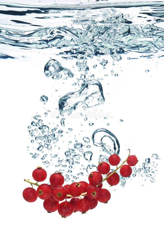 crabapples wody fotografia royalty free