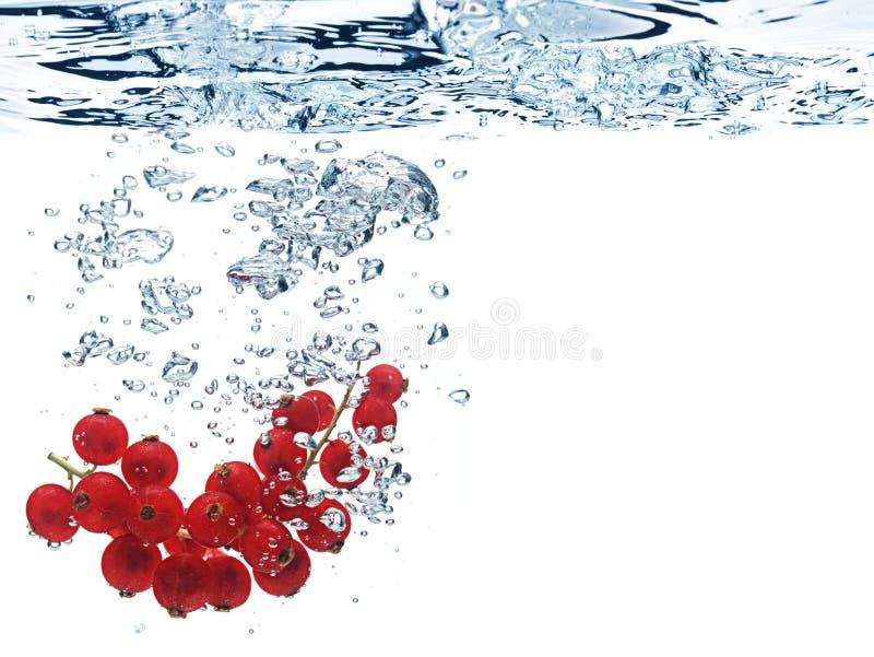 crabapplesvatten arkivfoton