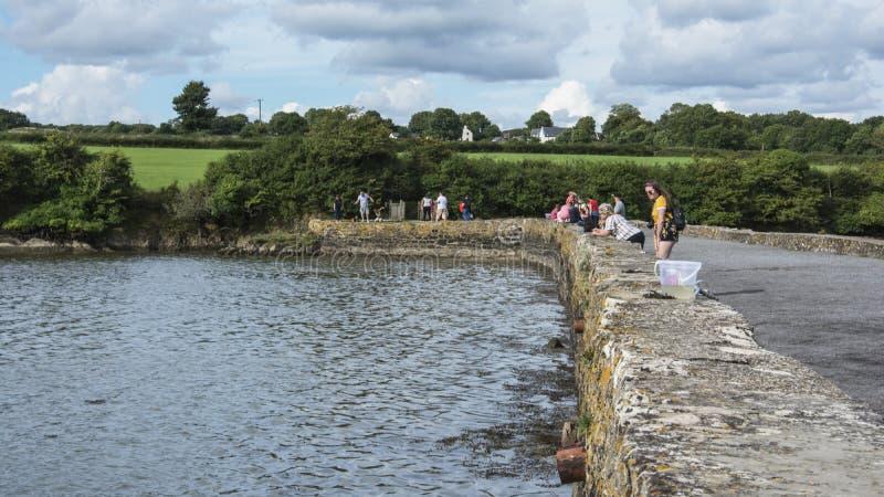 Crabbing в приливном бассейне мельницы на Carew стоковая фотография rf