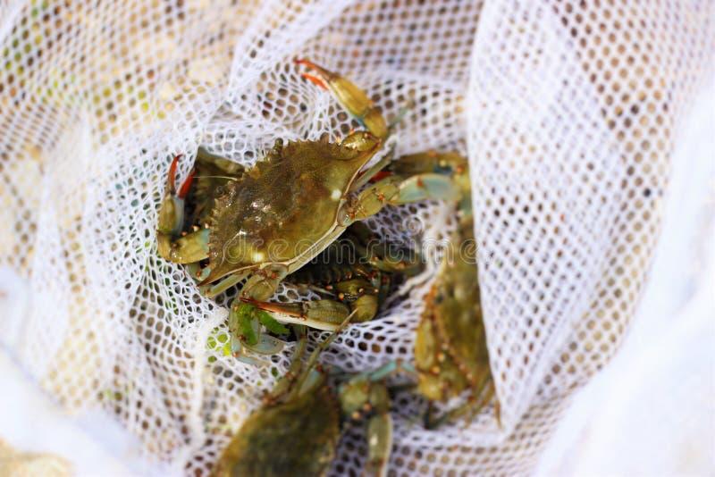 crabbing foto de archivo libre de regalías