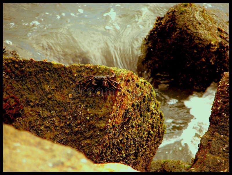 crabby стоковые фотографии rf